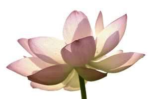 Lily Therapy Counseling Flower